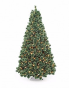 Sears Christmas Trees